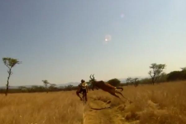 Mountain biker gets wiped out by wild buck