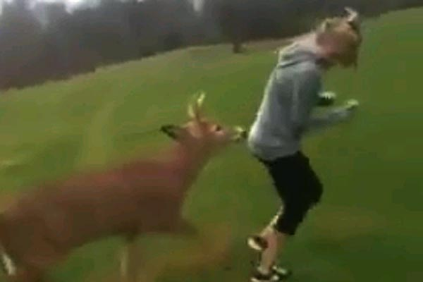Deer tries to hump a girl