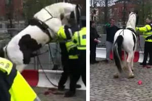 Horse tries to hump police man