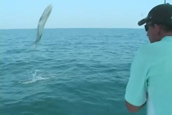 Flying barracuda almost wipes out fisherman