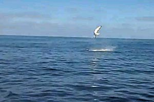 Mako shark does 9 somersaults