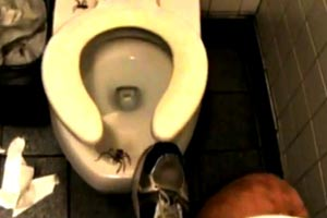 Why you should always check under the toilet seat
