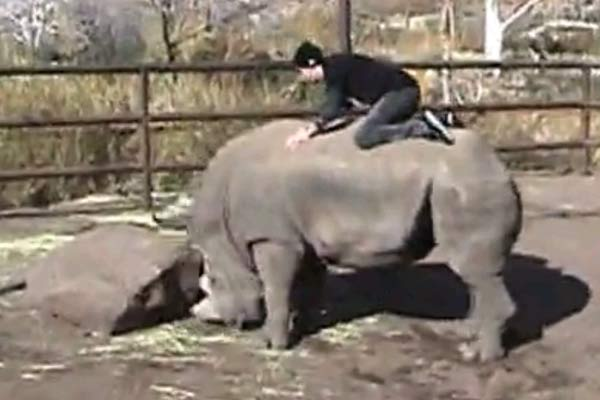 Guy rides a rhino