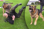 Video: Jono vs Attack Dog